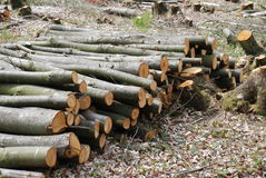 Timber pile, Bedgebury Stock Photography