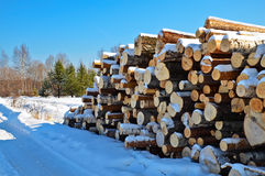 Timber pile in the snow. A pile of timber in the winter against the backdrop of trees, green pine and blue sky Stock Photography