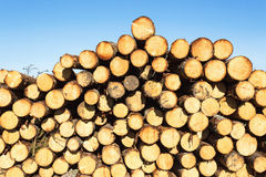 Timber pile Royalty Free Stock Photography
