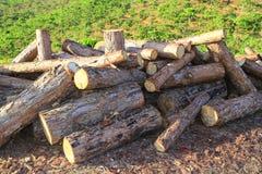 Timber ready for transport. Dalat, Vietnam Stock Image