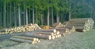 Timber ready for transport, South Bohemia. Czech Republic Stock Photo