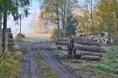 Timber ready for transport, South Bohemia Stock Photography