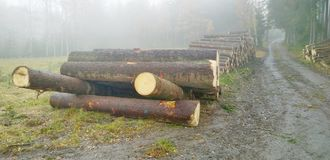 Timber ready for transport, South Bohemia Stock Photo