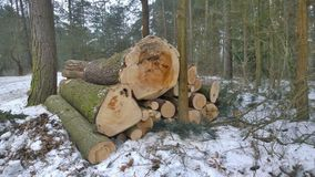 Timber ready for transport, South Bohemia Royalty Free Stock Photo