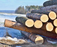 Timber ready for transport, South Bohemia Stock Images