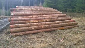 Timber ready for transport, South Bohemia Royalty Free Stock Image