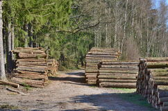 Timber ready for transport, South Bohemia Royalty Free Stock Images