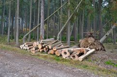 Timber ready for transport, South Bohemia. Czech Republic Royalty Free Stock Image
