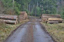 Timber ready for transport, South Bohemia. Czech Republic Royalty Free Stock Photos
