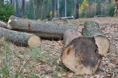 Timber ready for transport, South Bohemia, Czech Republic stock photography