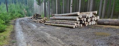 Timber ready for transport, South Bohemia. Czech Republic Stock Images
