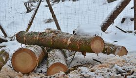Timber ready for transport, South Bohemia Stock Image