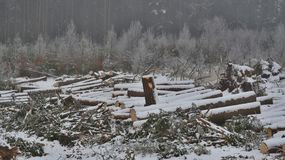 Timber ready for transport, South Bohemia. Czech Republic Royalty Free Stock Photography