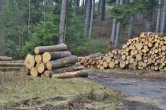 Timber ready for transport, South Bohemia. Czech Republic Royalty Free Stock Photo