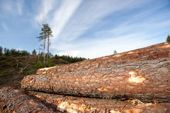 Timber resources Stock Images