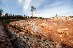 Timber resources Stock Image