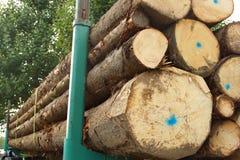 Timber resources close-up Stock Photos