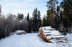 Timber at roadside Royalty Free Stock Images