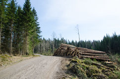 Timber at roadside Royalty Free Stock Photography