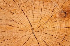 Timber or saw timber Royalty Free Stock Photography