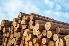 Timber or saw timber. Timber-wood materials that retain their natural physical structure and chemical composition of felled trees Royalty Free Stock Photography