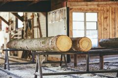 Timber at the sawmill. Lumber industry. Trunks of trees prepared for cutting at the sawmill Royalty Free Stock Image