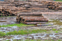 Timber Sawmill Series 3 Royalty Free Stock Photo