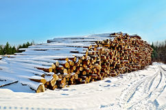 Timber in the snow on a sunny day. A stack of timber in the winter on a background of trees, green pine trees and blue sky on a sunny day Stock Images