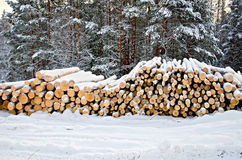 Timber on snow in winter forest. Stack of wood in the winter on a background of trees, snow, sky Stock Image