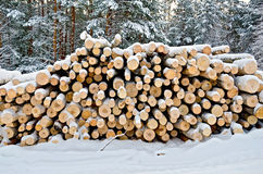 Timber on the snow in winter forest. Stack of wood in the winter on a background of trees, snow, sky Stock Photography