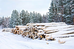 Timber on the snow in winter. Stack of wood in the winter on a background of trees, snow, sky Royalty Free Stock Image