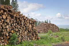 Timber Stack Royalty Free Stock Photography