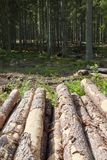 Timber Stack Stock Image