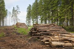 Timber Stack Stock Photos
