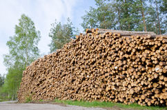 Timber stack. Big timber stack waiting to be transported Stock Images