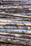 Timber Stack Royalty Free Stock Photo
