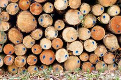 Timber Stack with blue markings Stock Image