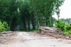 Timber Stack on clearcutting area Stock Image