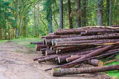 Timber stack in woods Stock Photo