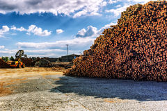 Timber stacked at lumber mill. Industrial concept Stock Photos