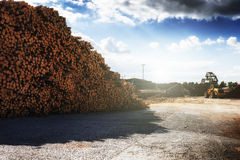 Timber stacked at lumber mill Royalty Free Stock Image