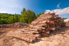 Timber stacked at lumber mill. Pine logs stacked at lumber mill in Ontario, Canada Royalty Free Stock Images