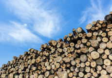 Timber stacked Royalty Free Stock Photos