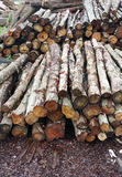 Timber Stacked Stock Photography
