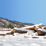 Timber stacks in snow Royalty Free Stock Photography