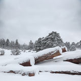 Timber stacks in snow Stock Images