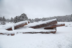 Timber stacks in snow with forest Stock Images