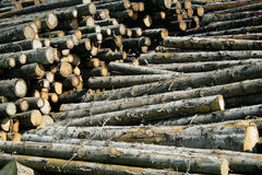 Timber stock. Seasoned timber stock Royalty Free Stock Photo