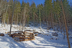 Timber structures for loading logs at slope in winter forest royalty free stock photos