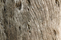 Timber stump background Royalty Free Stock Photo